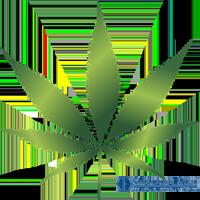 Лицензирование по обороту наркотических средств, лицензия на оборот психотропных веществ, лицензирование культивирования растений, лицензия на наркосодержащие растения, лицензия на прекурсоры, получить, стоимость, как, где, 2019 | Объединенные Юристы